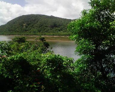浦内川その1