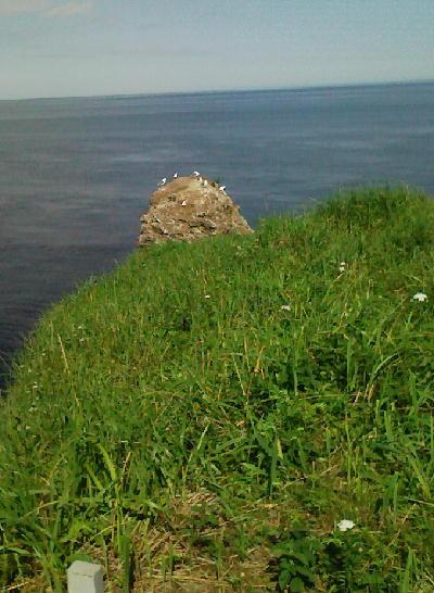 納沙布岬のカモメ