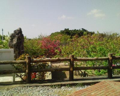 八重瀬公園の葉桜